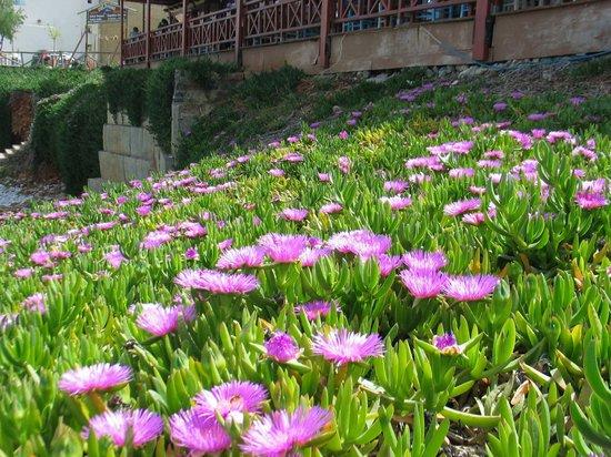 Hotel Mikro Village: Flowers in Plaka