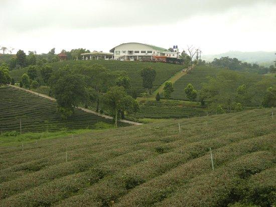 Choui Fong Tea Plantation: View of tea house and plantation.