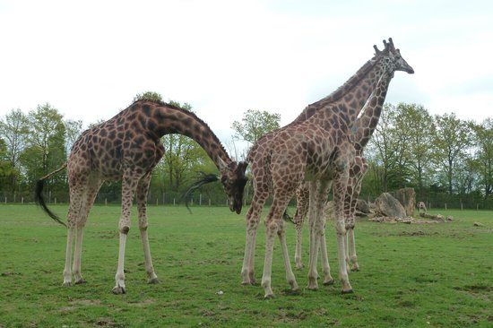 Parc Zoologique Cerza : 2