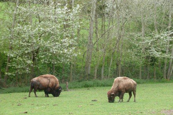 Parc Zoologique Cerza : 7