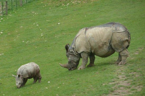 Parc Zoologique Cerza : 3