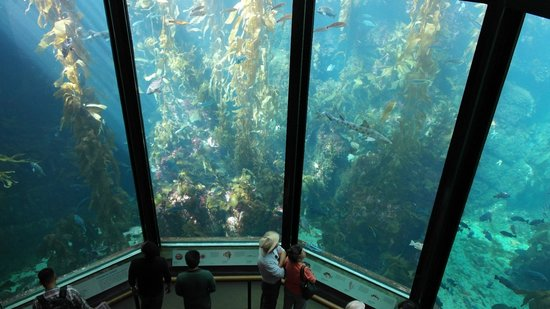 Can You See It Picture Of Monterey Bay Aquarium