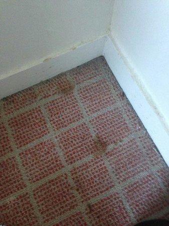 Middlesbrough Hotel - Sporting Lodge: Carpet