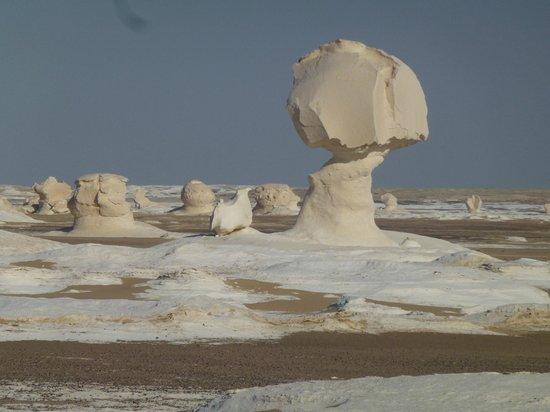 Bahariya (Bahereya) Oasis : Formaciones calcareas