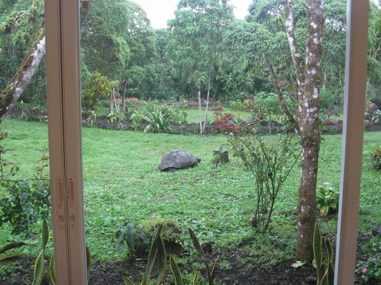 Semilla Verde Boutique Hotel : view from yoga studio