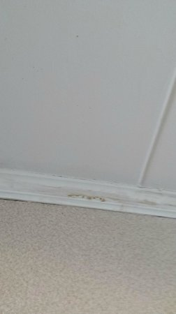Quality Inn Boardwalk: black mold/mildew on ceiling