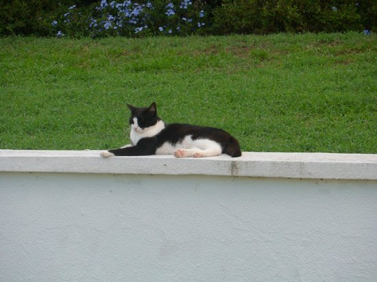The Towers at Mullet Bay: Pool Kitty
