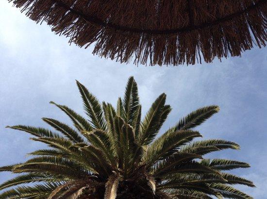 Melia Gorriones Fuerteventura: By swimming pool