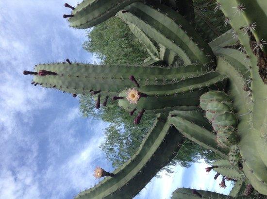Melia Gorriones Fuerteventura: Garden