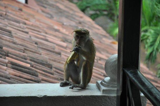 Cinnamon Lodge Habarana: animaux de l'hotel