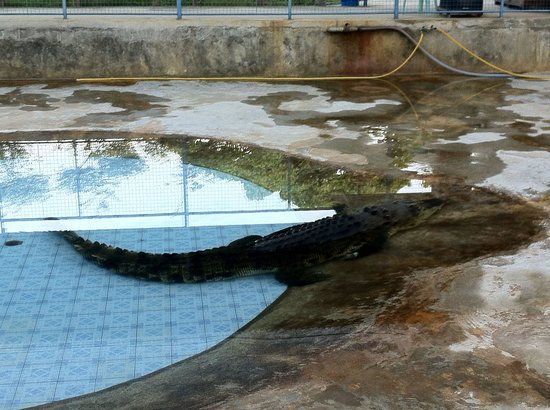 Tuaran Crocodile Farm: A crocodile