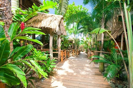The Sunken Fish Tree Top Ocean View Bar & Restaurant: jungle losing and dining!