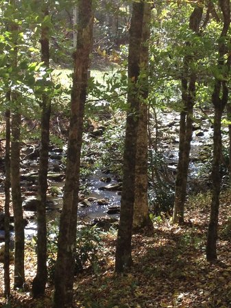 Cherokee Mountain Cabins: View of creek from a trail