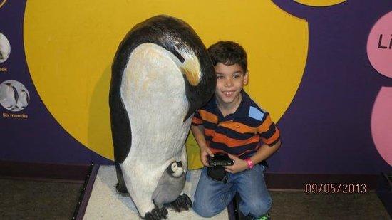 Shedd Aquarium: con un maniquí