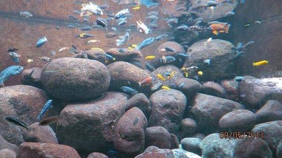 Shedd Aquarium: peces