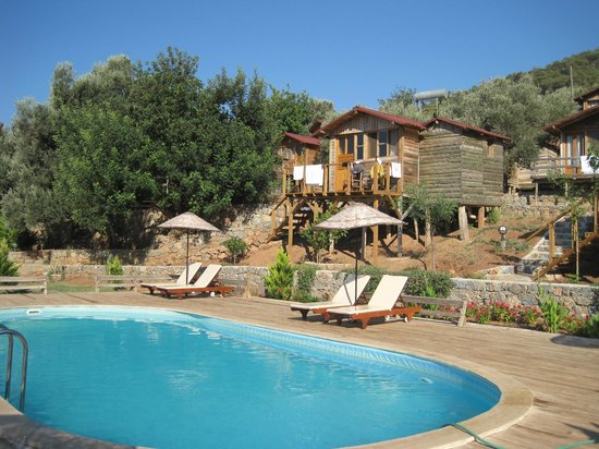 The Olive Garden: Pool and cabins