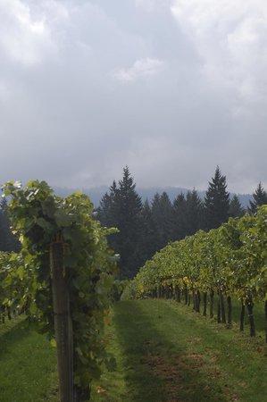 Willamette Valley: Blakeslee Vineyards Sherwood OR