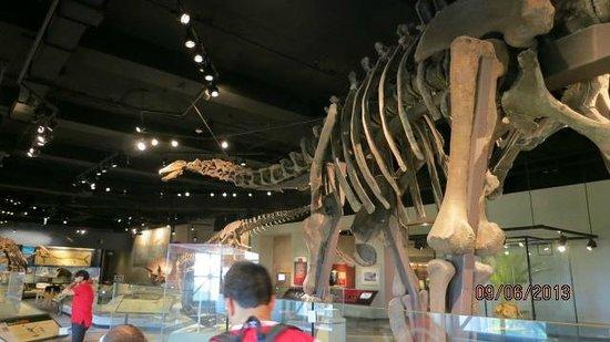 The Field Museum: miren este