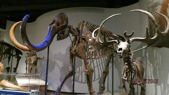 The Field Museum: dinosaurios