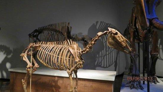 The Field Museum: un caballo milenario