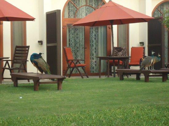 JA Palm Tree Court: Une chambre en rdc