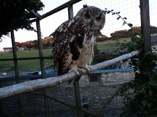 Putlake Adventure Farm: Mitsy our Bengalese owl