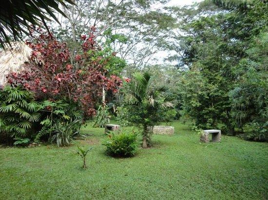 Macaw Bank Jungle Lodge : beautiful natural grounds