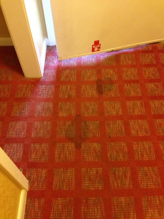 Motel 6 Hot Springs, AR : Stains on carpet in the second room.