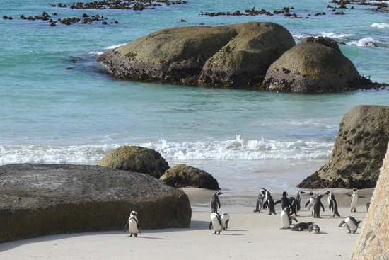 Cape Town Day Tours: boulder's beach