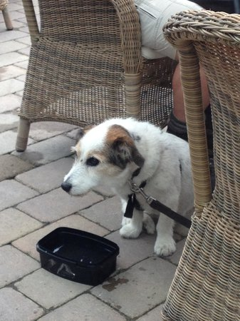 The Tullie Inn: Outdoor seating for Pets