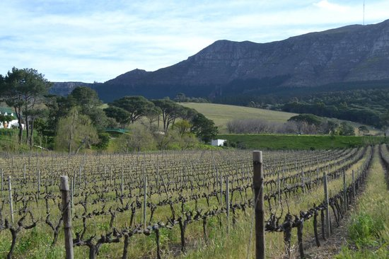 Cape Town Day Tours: vineyard