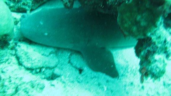"""ScubaTech Grenada: Am """"Shark Reef"""""""