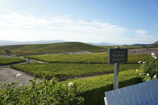 William Hill Estate Winery : beautiful scenery