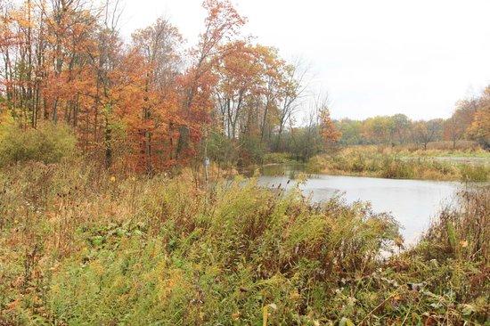 Ridgemoor B&B: the pond