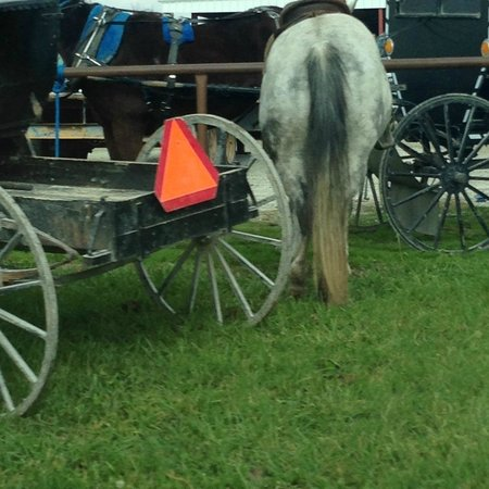 Amish People: parked buggy and horse
