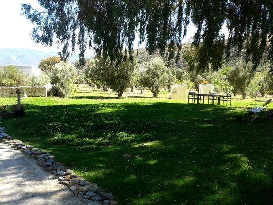 Makouvlei Guest Farm: A shady lawn in need of blanket, good book and relaxed person!