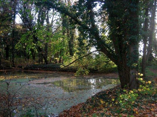 Schloss Kartzow: Teilansicht Park