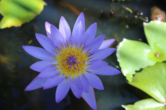 Fern Grotto Inn : Water lily ponds