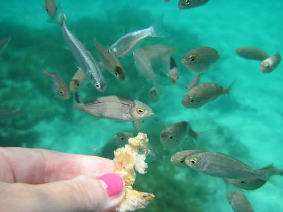 Hornblower Cruises: Clear water, taken at Blue Lagoon with my underwater camera. Feeding the fish.