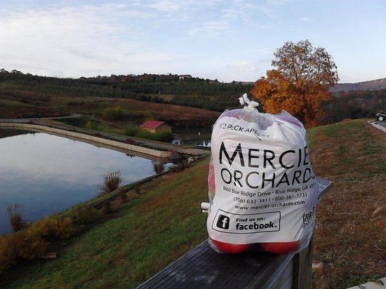 Mercier Orchards: At the Orchard