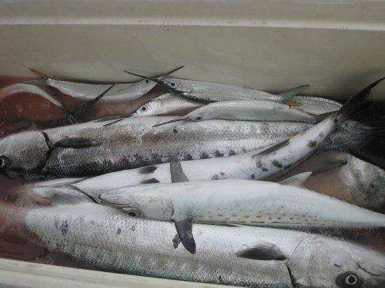 CayeReef: big catch