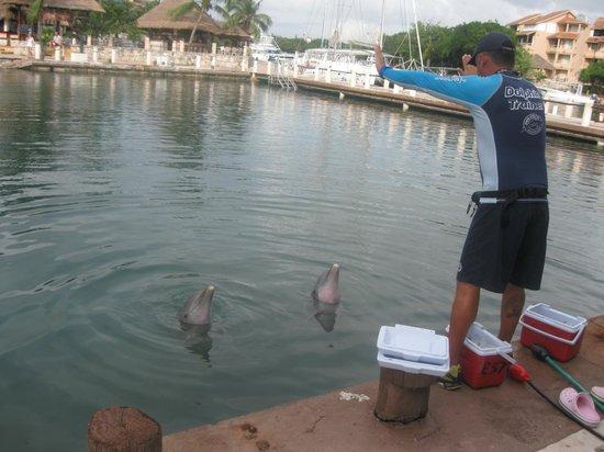 Catalonia Riviera Maya : feeding dolphins