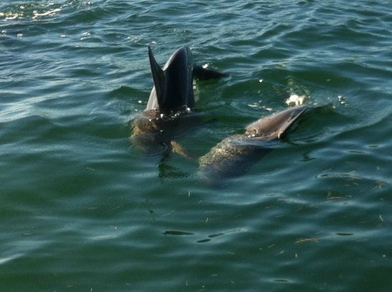 Easy Day Charters: Dolphins