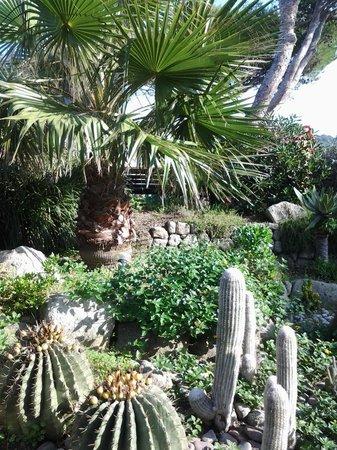 Hotel Tritone Wellness Center : giardino che circonda tutto l'hotel ..bellissimo