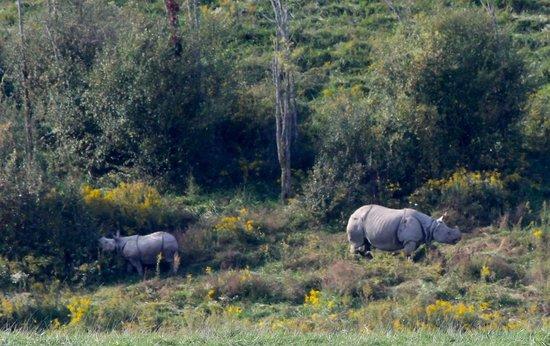 The Wilds: Female rhino & baby in bush
