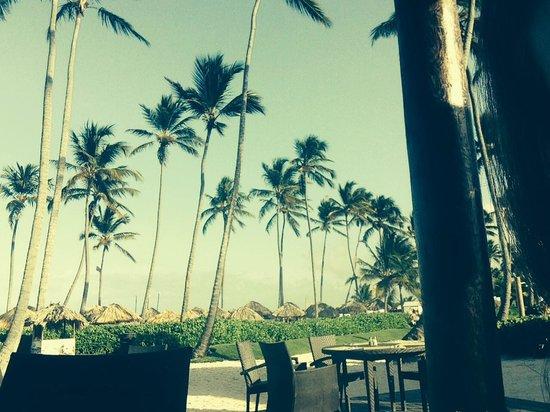 Now Larimar Punta Cana: Palms
