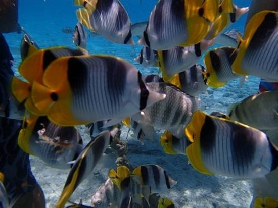 Keishi Tours: Reef Fish