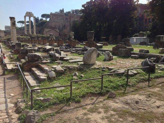 Clam Tours : Forum