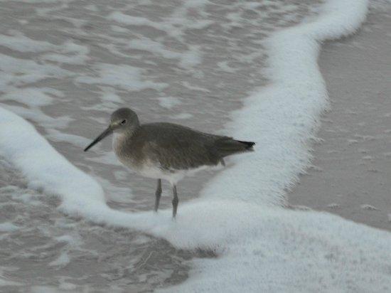 Shoreline Island Resort: foaming brine