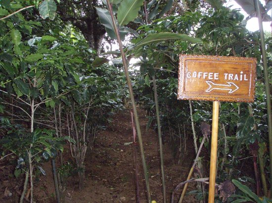 Hotel Buena Vista: Along the Coffee Trail